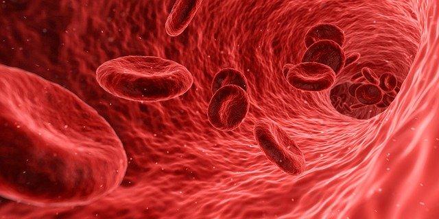 血管を流れる赤血球のイメージ